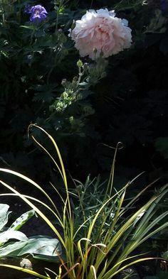 Zomer in de tuin van Tjeerd.