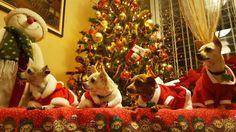 Tato, Chloe, LolliPop, kay chihuahuas navideños!