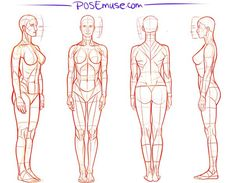 Pose Reference : posereference: Recap of some recent pieces . Human Anatomy Drawing, Gesture Drawing, Anatomy Art, Drawing Poses, Body Reference Drawing, Body Drawing, Art Reference, Anatomy Sketches, Art Sketches