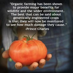 Organic is the healthy way forward ... genetic modified organism (GMO) can't be the answer !  Watch Bill Moyers interview Vandana Shiva, discussing genetic diversity, food sovereignty and the dangers of corporate control over our seed !! Here is the video:   http://www.youtube.com/watch?v=fG17oEsQiEw
