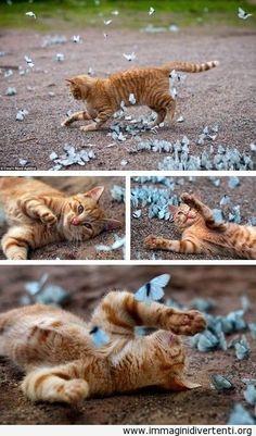 Crogiolarsi nelle farfalle