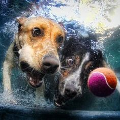 Seth Casteel Underwater Puppies Underwater Dogs Underwater Babies Lifestyle Pet Photography by Seth Casteel. Underwater Dogs, Underwater Photos, Underwater Photography, Underwater Life, Funny Animal Pictures, Funny Animals, Cute Animals, Dog Pictures, Hilarious Photos