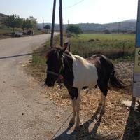 Photo taken at Skyros Town by Alex B. on 8/10/2014