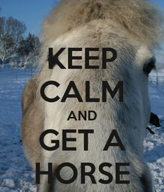 keep calm horse - Google Search
