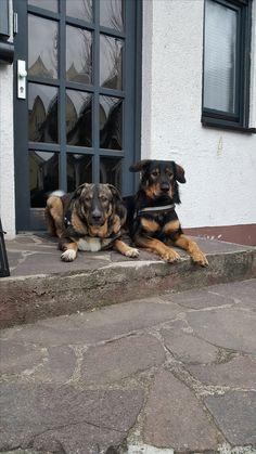 Hunde Foto: Grabner und Atilla und Tyson - Keiner kommt rein Hier Dein Bild hochladen: http://ichliebehunde.com/hund-des-tages  #hund #hunde #hundebild #hundebilder #dog #dogs #dogfun  #dogpic #dogpictures
