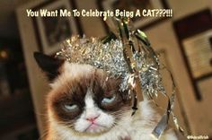 Grumpy Cat - You want me to celebrate being a cat???!!!