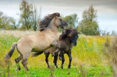 Horses have been domesticated for thousands of years, and in that time we've had a chance to influence some extraordinary breeds.