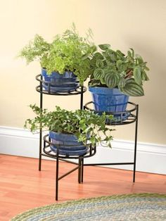 Elevated plant stand nt decorative stands of indoor for sale diy multi level house plants metal tall large pots wooden garden Modern Plant Stand, Metal Plant Stand, Diy Plant Stand, Plant Stands, Best Indoor Plants, Cool Plants, Indoor Herbs, Hanging Plants, Potted Plants