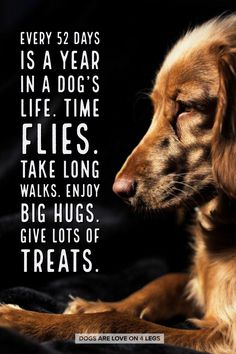 Dog Quote - Every 52 Days Is a year in a dog's life... Dog, Dog Quotes Inspirational Quotes, Funny Quotes, Life Quotes