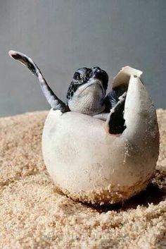 Hatch turtle hatch!!