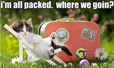 Funny Moving Tips in Photos Moving Humor, Moving Memes, Funny Cats, Funny Animals, Cute Animals, Cat Quotes, Animal Quotes, Funny Moving Pictures, Moving And Storage
