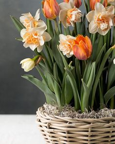 Basket of Tulips and Daffodils Easter Flower Arrangements, Easter Flowers, Spring Bulbs, Spring Blooms, Flowers For You, Colorful Flowers, My Flower, Flower Pots, Daffodils