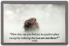 Joy in a Joyless Place
