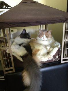 Tiny gazebo for my cats - Imgur