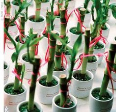 Lucky Bamboo Favors & Centerpieces - sticker w/names & date etc