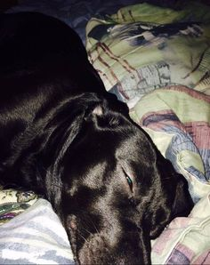 """Just wanted to let everyone know that I have had the best results using Vet-Organics. My black lab has suffered from chronic ear infections--never scabs or oozing, but her ears smelled & she would scratch so I knew she was uncomfortable. I felt terrible! Tried every antibiotic, ointment the vet gave us & it always returned. I saw this & ordered it--the very next day, the smell was gone & significant improvement in both of her ears!! It's so easy to use & she didn't whimper or anything!"""