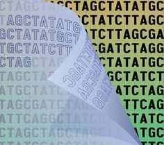 Multi-tasking DNA: Dual-use codons in the human genome