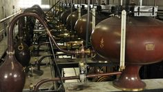 The famous Les Buissons distillery.    Two slow distillations in charentais pot stills of 2500-liter capacity give CAMUS cognacs their inimitable, complex style.
