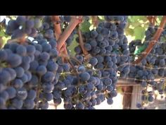 Great wine documentary on YouTube! A little long, so pin it and watch later with a few glasses on the couch.