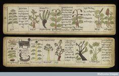 Tibetan Herbarium