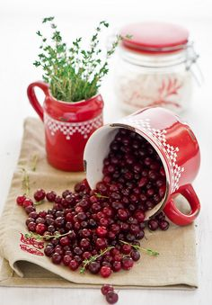 cranberries...  Such a lovely scene.