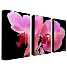 @Overstock - This floral canvas art set showcases a striking pink orchid on an all black background and would make a contemporary statement in the modern home. Split over three panels, this piece by Kathie McCurdy would liven up any space in the house.http://www.overstock.com/Home-Garden/Kathie-McCurdy-Orchid-Canvas-Art-Set/6208832/product.html?CID=214117 $111.59