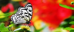 Blooms & Butterflies: 20th Anniversary, Franklin Park Conservatory and Botanical Gardens, Columbus Ohio