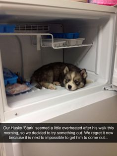 we regret it now because it is next to impossible to get him to come out #Funny