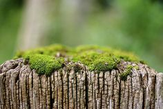 Weathered wood and moss