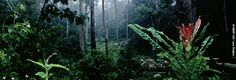 WWF - Congo Basin - The heart of Africa