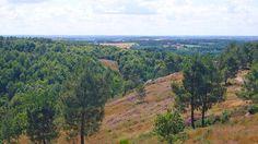 La forêt de Brocéliande ou forêt de Paimpont en Bretagne © CRT Bretagne #voyage #france #bretagne #broceliande