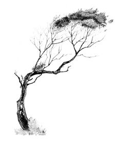 Tree Pen & Ink Art Print
