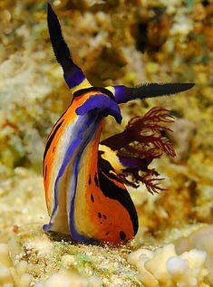 Nudibranch                                                                                                                                                                                 More