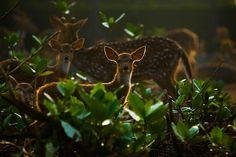 the deers by Syahrul Ramadan, via 500px