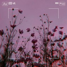 اطلب تنسيقك # Non-fiction # amreading # books # wattpad Aesthetic Themes, Aesthetic Images, Aesthetic Collage, Flower Aesthetic, Purple Aesthetic, Aesthetic Backgrounds, Aesthetic Iphone Wallpaper, Aesthetic Grunge, Aesthetic Vintage