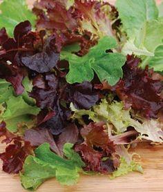 Lettuce Baby LeafMix