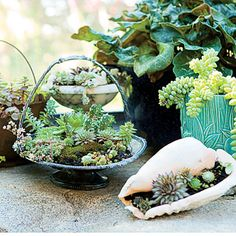 Decorating with succulent plants with flea market find planters.