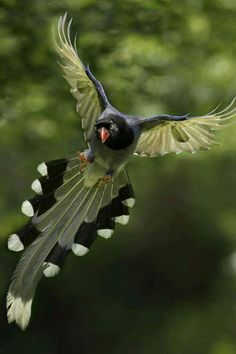Feathered Friends ~