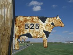 cow sign - Google Search