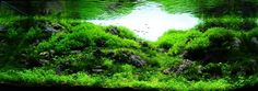 Aquascaping | Aquascaping Contest 2010 in Vietnam - RESULTS | AquaScaping World ...