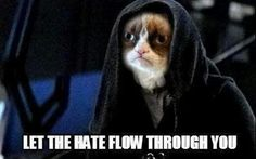 """Grumpy cat: """"Let the hate flow through you"""" Grumpy cat: """"That's my turtle"""" (in regards to hating turtle) Grumpy cat doesn't w..."""