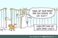 Funny pictures about How Cats End Up With Nine Lives. Oh, and cool pics about How Cats End Up With Nine Lives. Also, How Cats End Up With Nine Lives photos. Crazy Cat Lady, Crazy Cats, Funny Cute, The Funny, Hilarious, I Love Cats, Cute Cats, Funny Kitties, Silly Cats