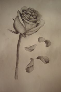 Rose with falling petals