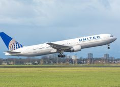 A Giant Rabbit Dies On United Airlines Flight To US