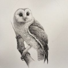 ... drawings and more owl drawings barn owls barns drawings owl artists ps