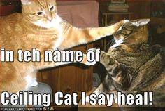 in teh name of  Ceiling Cat I say heal!