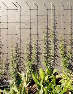 Wire Trellis, Garden Trellis, Balcony Garden, Garden Benches, Garden Boxes, Vertical Garden Wall, Vertical Gardens, Garden Wall Designs, Green Facade