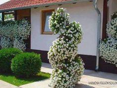 Green and white Garden Park, Green Flowers, Beautiful Gardens, Garden Plants, Flower Pots, Lawn, Home And Garden, Backyard, Rustic