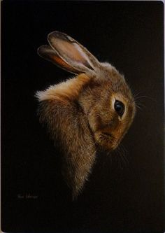 The hare is the companion animal of many manifestations of the goddess. - The hare is the companion animal of many manifestations of the goddess. Beautiful Creatures, Animals Beautiful, Animals And Pets, Cute Animals, Lapin Art, Bunny Art, Bunny Bunny, Rabbit Art, Tier Fotos