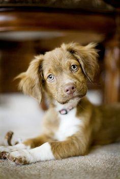 Looks a lot like Echo as a pup